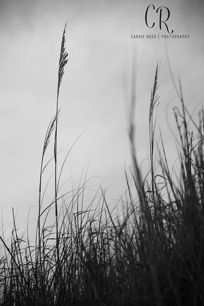 SC_Dune Grass_WM