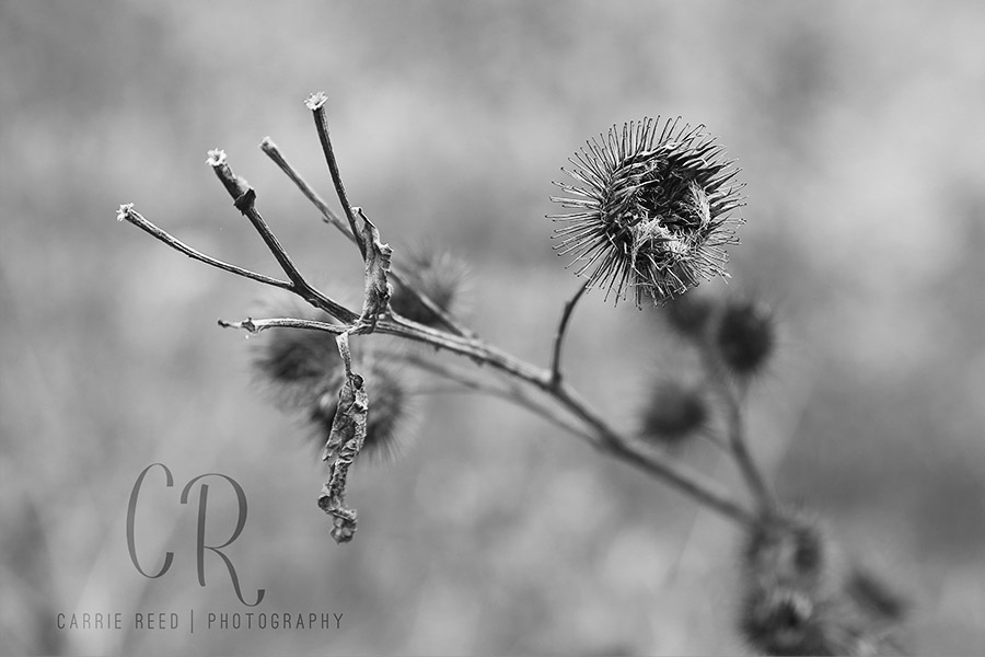 minneapolis_macro_seed_bw_wm